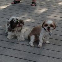7/21/2013 tarihinde Kathryn B.ziyaretçi tarafından Tompkins Square Park Dog Run'de çekilen fotoğraf
