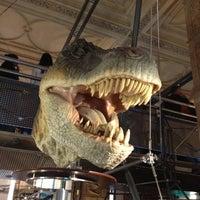 Foto scattata a Museo di storia naturale da Egui B. il 6/16/2013