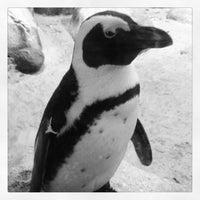 3/3/2013 tarihinde Brooke J.ziyaretçi tarafından Minnesota Zoo'de çekilen fotoğraf