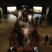Foto scattata a American Museum of Natural History da Jia il 6/5/2013
