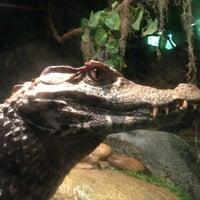 3/18/2013에 Michelle D.님이 Cameron Park Zoo에서 찍은 사진