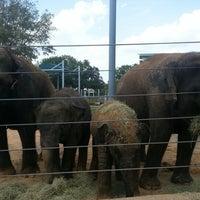 Foto tomada en Houston Zoo por Elizabeth Z. el 8/11/2012