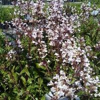 Sun Nurseries 14790 Bushy Park Rd