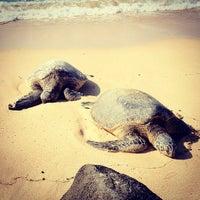 Foto tomada en Laniakea (Turtle) Beach por Myra K. el 1/25/2012
