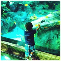 Foto diambil di SEA LIFE Grapevine Aquarium oleh Odin C. pada 5/28/2012