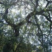 Foto scattata a Treaty Oak da Joe P. il 3/4/2012
