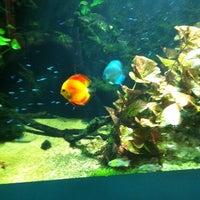 Foto tomada en Underwater World por Caleb D. el 11/15/2011