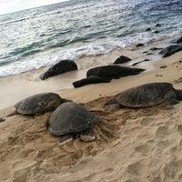 Foto tomada en Laniakea (Turtle) Beach por Tracy N. el 2/25/2012