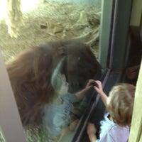 Снимок сделан в Phoenix Zoo пользователем Jared P. 10/31/2011