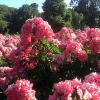 รูปภาพถ่ายที่ El Rosedal โดย Laura P. เมื่อ 1/4/2012