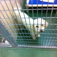 Rochester Animal Services Center - Animal Shelter in Rochester