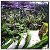 Снимок сделан в Tegallalang Rice Terraces пользователем Fha K. 7/4/2012