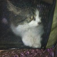 Photo prise au The Cats Meow par Sunny S. le5/30/2012