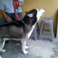Zoom Pet Care Pet Store