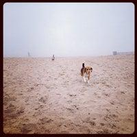 Montrose Dog Beach - Uptown - 56 tips