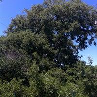 Foto scattata a Treaty Oak da Nathan L. il 4/21/2012