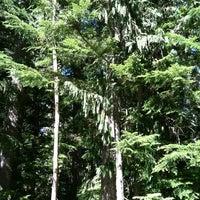 Das Foto wurde bei Mount Rainier National Park von Marcus G. am 9/7/2012 aufgenommen