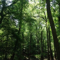 Image added by nikhil t at Congaree National Park