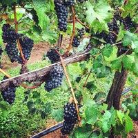 Foto scattata a King Family Vineyards da Josh W. il 8/19/2012