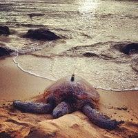 Foto tomada en Laniakea (Turtle) Beach por Ryan A. el 5/30/2012