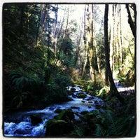 Снимок сделан в Forest Park - Wildwood Trail пользователем Tess M. 3/25/2012