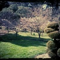 Снимок сделан в San Francisco Botanical Garden пользователем Eli C. 3/22/2012