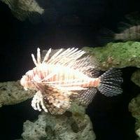 Foto tomada en Oklahoma Aquarium por Roger W. el 3/29/2012