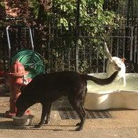 5/1/2012 tarihinde Talia F.ziyaretçi tarafından Tompkins Square Park Dog Run'de çekilen fotoğraf