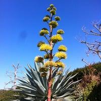 Снимок сделан в Torrey Pines State Natural Reserve пользователем LiveFit F. 3/10/2012