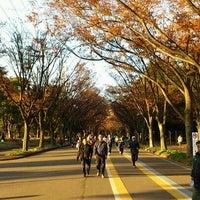 12/11/2011にGOGOGO!が駒沢オリンピック公園で撮った写真