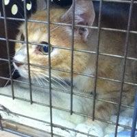8/6/2012에 Kelly R.님이 Four Paws Animal Hospital에서 찍은 사진