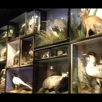 3/16/2012にTom d.がThe Jugged Hareで撮った写真