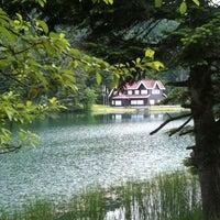 6/4/2012 tarihinde Smr A.ziyaretçi tarafından Gölcük Tabiat Parkı'de çekilen fotoğraf