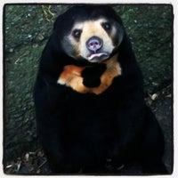 4/25/2012 tarihinde Monica M.ziyaretçi tarafından Wellington Zoo'de çekilen fotoğraf