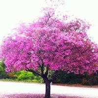5/11/2012にAnyaがDescanso Gardensで撮った写真