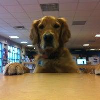 small dog electronics burlington