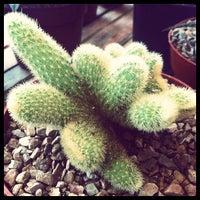 Foto tirada no(a) Desert Botanical Garden por Daniel K. em 2/5/2012