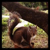 Снимок сделан в San Francisco Botanical Garden пользователем Kirk W. 1/30/2012