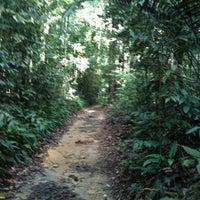 Foto scattata a MacRitchie Nature Trail da Rachel C. il 7/7/2012