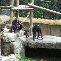 2/10/2012 tarihinde Karen H.ziyaretçi tarafından Wellington Zoo'de çekilen fotoğraf