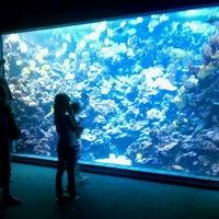 Photo prise au Maui Ocean Center, The Hawaiian Aquarium par Ryan M. le3/9/2011