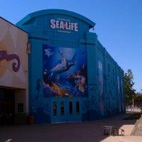 Foto diambil di SEA LIFE Grapevine Aquarium oleh Jennifer E. pada 9/10/2011