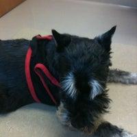 9/8/2011にMeghann S.がFour Paws Animal Hospitalで撮った写真