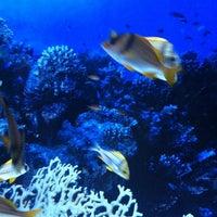 Снимок сделан в ТРК «Планета Нептун» пользователем Marina T. 6/30/2012