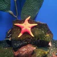 Foto tomada en Oklahoma Aquarium por Katelyn A. el 8/9/2012