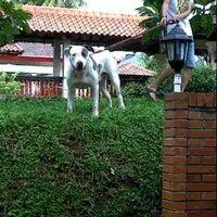 40+ Anjing bull terrier dijual terupdate