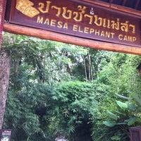 Foto scattata a Maesa Elephant Camp da Patcharawee P. il 8/31/2011