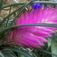 Photo prise au Garfield Park Conservatory par Margaret H. le2/2/2012