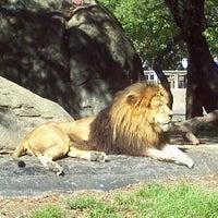 Снимок сделан в Houston Zoo пользователем Karla B. 3/23/2012