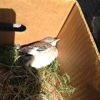 Das Foto wurde bei Prairie Paws Adoption Center von Tina V. am 6/14/2012 aufgenommen